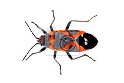 Käfer bett two bed