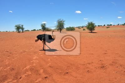 Kalahari Wüste, Namibia