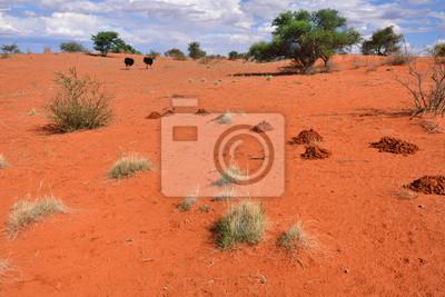 Kalahari Wüste, Namibia, Afrika