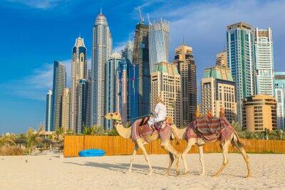 Poster Kamel in der Dubai Marina