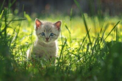 Poster Kätzchen