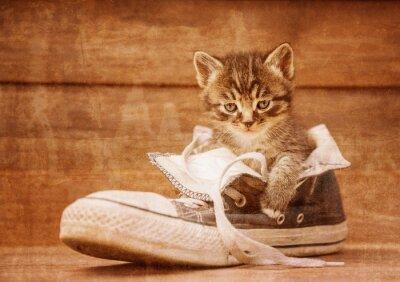 Poster Katze sitzt in einem Schuh, vintage image