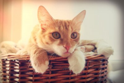 Poster Katze suchen