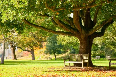 Poster Kew Gardens park