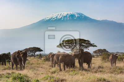 Poster Kilimandscharo