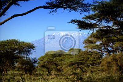 Kilimanjaro in Amboseli