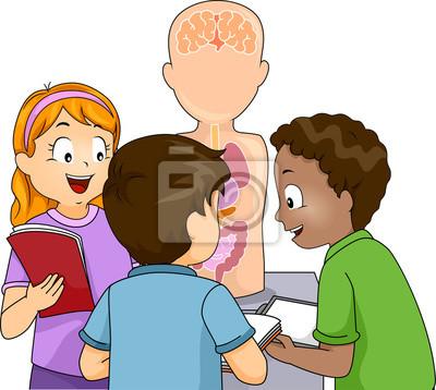 Kinder anatomie modell studie wandposter • poster kleine Gruppe ...
