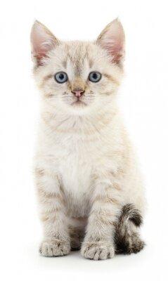 Poster Kitten auf einem weißen Hintergrund