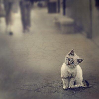 Poster Kitten On The Street