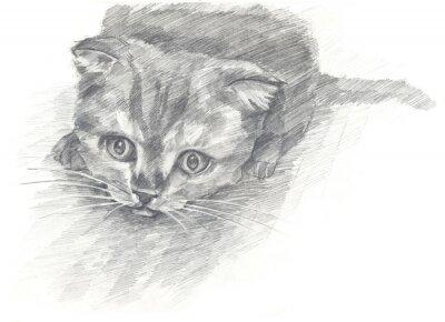 Poster Kitten schwarz und white.Painted Hände. Grafischer Stil.