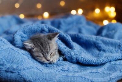 Poster Kleine Kätzchen schlafend unter einer Decke