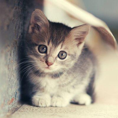 Poster Kleine niedliche Kätzchen Standort draußen