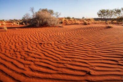 Poster Kleine Pflanzen in der Wüste von Western Australia