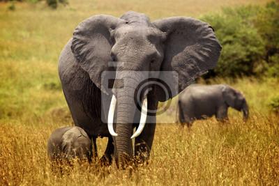 kleinen Elefanten folgt der Mutter auf den Ebenen von Masai Mara