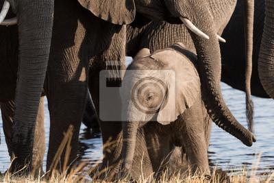 Kleiner Elefant von der Familie geschützt