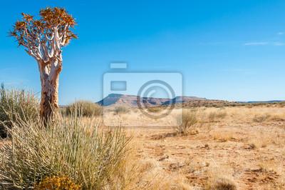 Köcher Wüste Baum