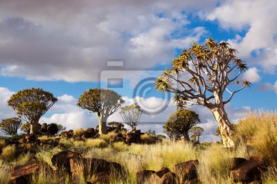 Köcherbaumwald. Kokerbooms in Namibia, Afrika