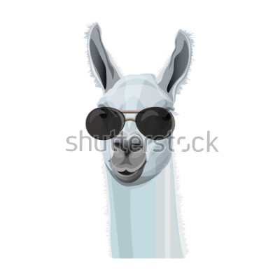 Poster Komisches Portrait des Lamas in den schwarzen Gläsern. Vektorabbildung getrennt auf weißem Hintergrund