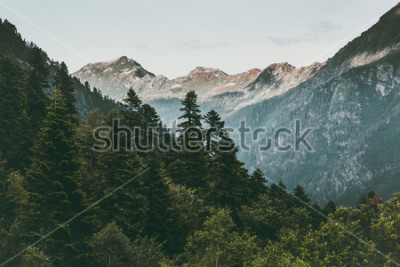 Poster Koniferenwald und Landschafts-Sommergrün der Gebirgslandschaftsreise ruhiges Landschaft