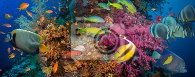 Poster Korallen und Fische