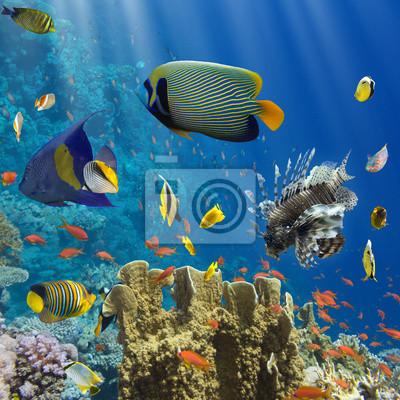 Poster Korallen und Fische im Roten Sea.Egypt