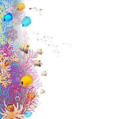 Poster Korallenriff