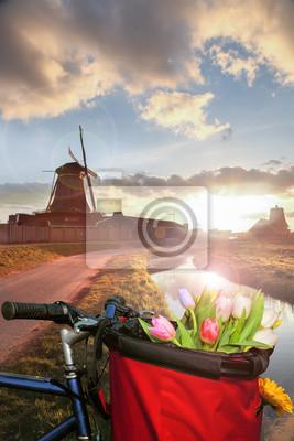 Korb mit bunten Tulpen gegen niederländische Windmühlen in Zaanse Schans, Amsterdam, Holland