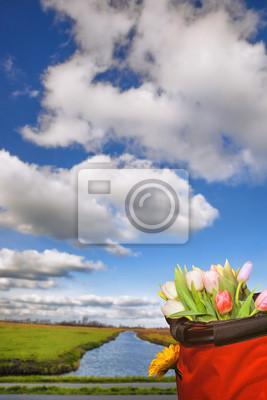 Korb mit bunten Tulpen in der Nähe der Zaanse Schans, Amsterdam Bereich, Holland