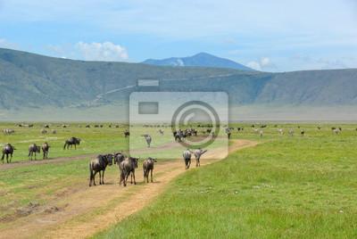 Krater Ngorongoro, Tansania
