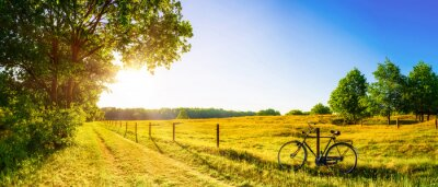 Poster Landscape in summer with trees and meadows in bright sunshine