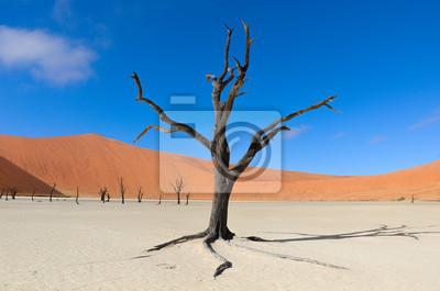 Landscape of Dead Vlei, Sossusvlei, Namibia, Südafrika