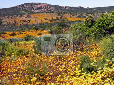 Landschaft in namaqualand Nationalpark, Republik Südafrika