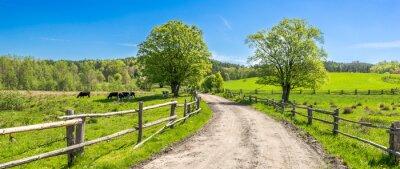 Poster Landschaftslandschaft, Bauernhoffeld und Gras mit dem Weiden lassen von Kühen auf Weide in der ländlichen Landschaft mit Landstraße, Panoramablick