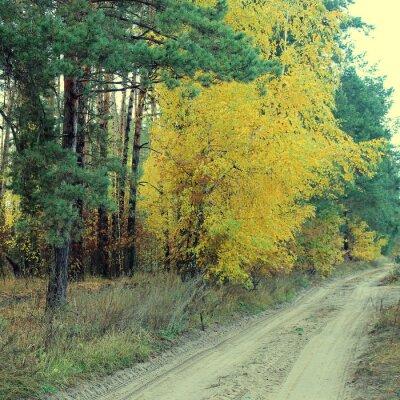 Poster Landstraße in einem schönen herbstlichen Wald