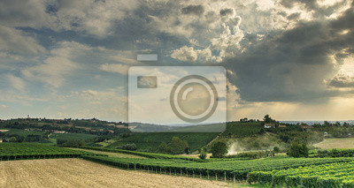 Langhe in vendemmia