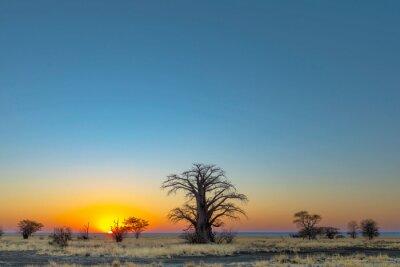 Large baobab tree at sunrise on Kukonje Island