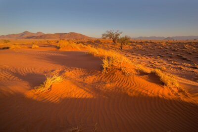 Late afternoon sun on red sand dune in Namib Desert