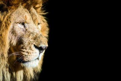 Poster Leone - Löwen