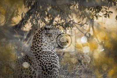 Leopard in Yala Nationalpark, Sri Lanka