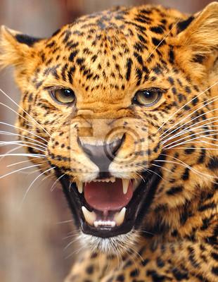 Leopard Porträt
