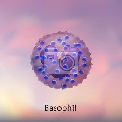 Leukozyten basophil lymphozyten weiße blut zelle. unscharfen ...