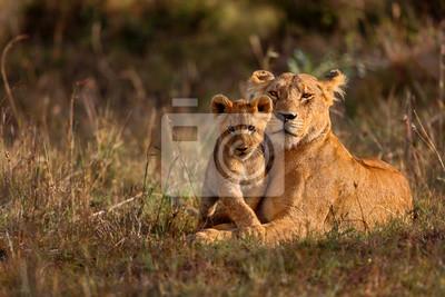 Poster Lion Mutter von Notches Rongai Stolz mit Cub in Masai Mara, Kenia