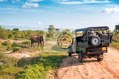 Poster live elephant on safari