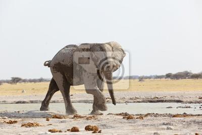 Lone Bull Elefant am Wasserloch