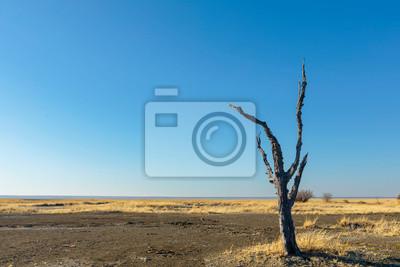 Lone dead tree on Kukonje Island