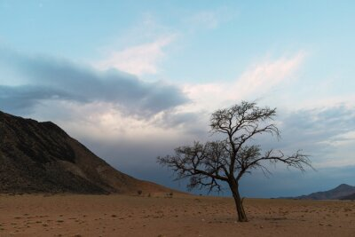 Lone dry acacia tree against blue sky and dark clouds