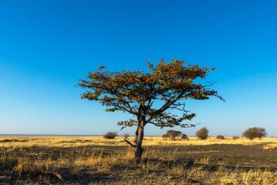 Lone mopani tree on Kukonje Island