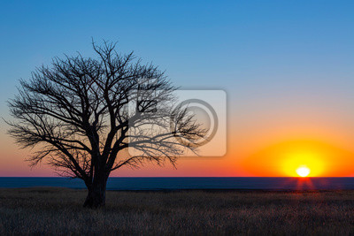 Lone tree at sunset on the pan