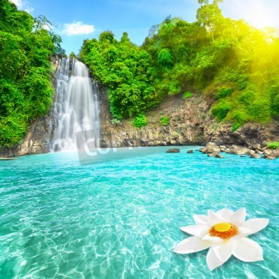 Poster Lotus-Blume in Wasserfallpool