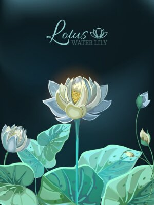 Poster Lotus flower with green leaves close-up in hand drawn style